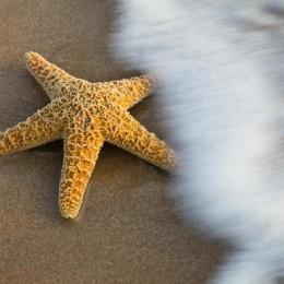 Морската звезда
